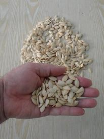 Семена собираю для кормушек