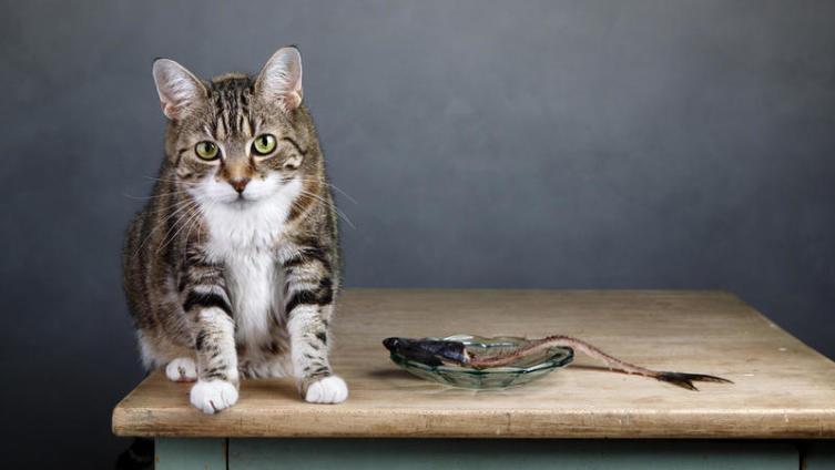 Чем кормить кота: специальный корм или натуральная пища?