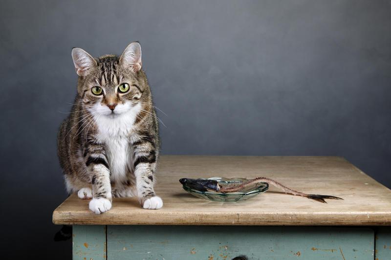 Кормим кота натуральными продуктами
