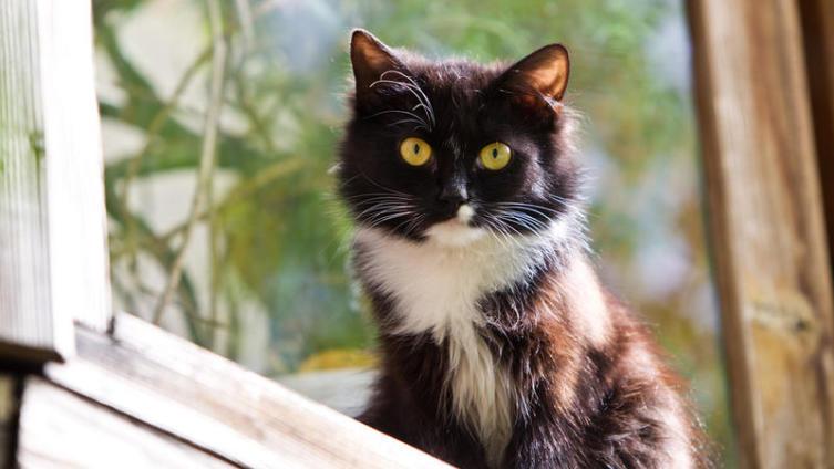 Стерилизация, кастрация... или оставить как есть? Владельцам кошек и собак