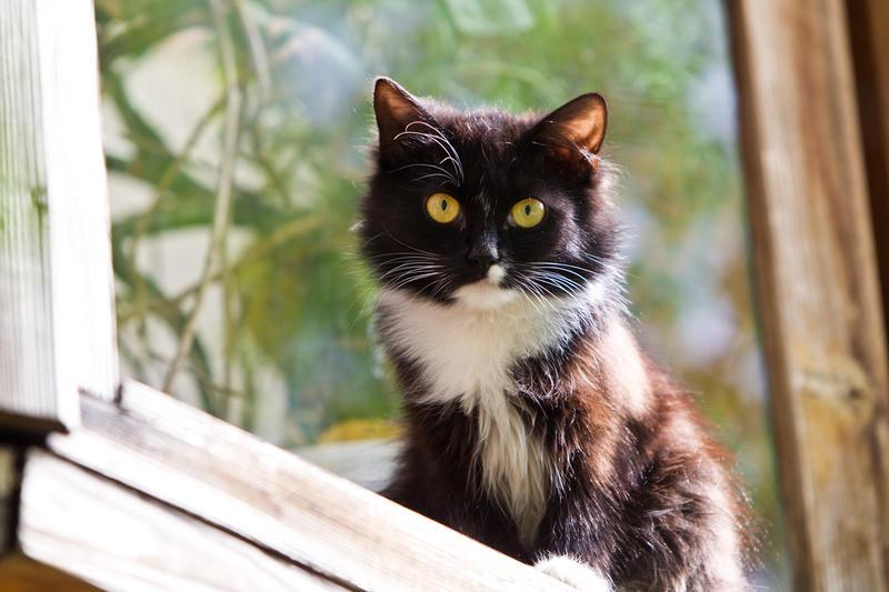 Выпускать ли кастрированного кота на улицу