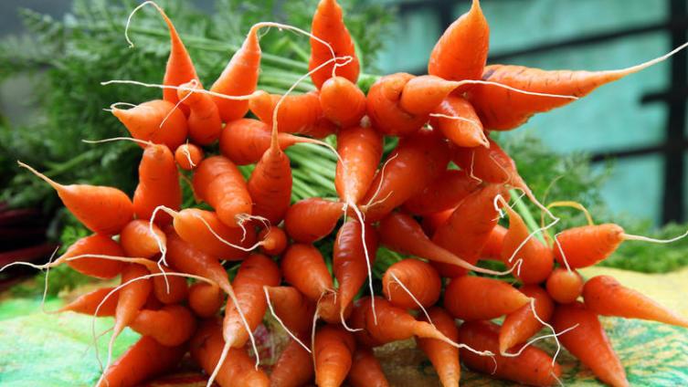 За что морковь считают несравненной, или Как познакомить детей с миром овощей?