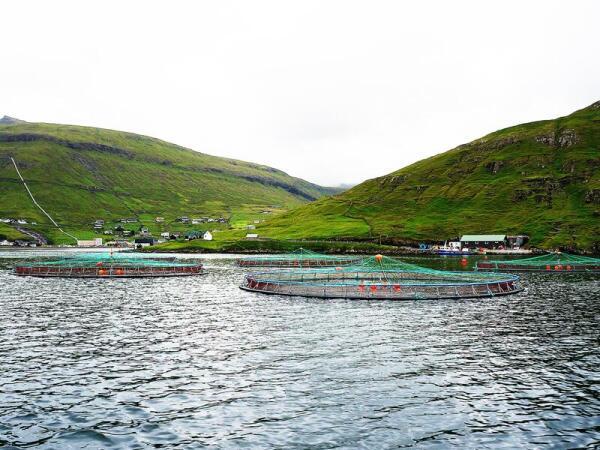 Здесь выращивается самый лучший лосось в мире