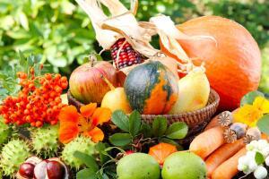 Что мы выращиваем и собираем на широте Магадана?