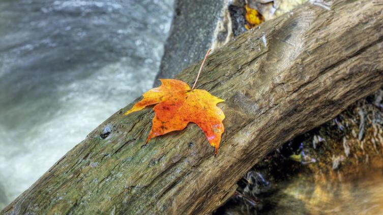 Осеннее равноденствие. Когда нужно отпустить старое?