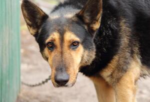 Цепные псы, или Только от жизни собачьей собака бывает кусачей?