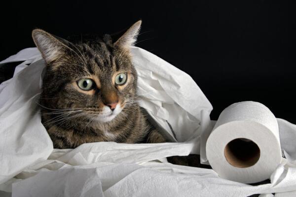 Как приучить кота к унитазу? Инструкция для начинающих котовладельцев