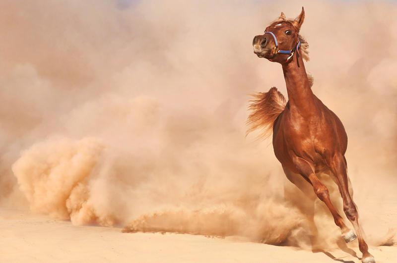 Тест «Куб»: найдете ли вы себя в пустыне?