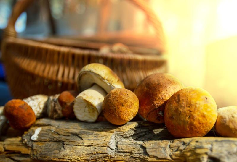 День грибника: кому пожелать «ни гриба ни лукошка»?