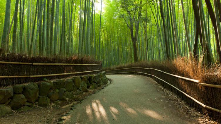 Бамбуковый лес Сагано - найдите умиротворение и спокойствие