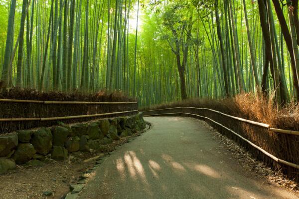 Бамбуковый лес Сагано - вдохновит и утешит?
