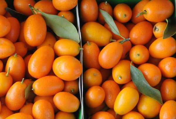 Кумкват – это что за фрукт?