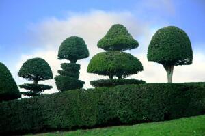 Топиарные сады: как создать произведение искусства?