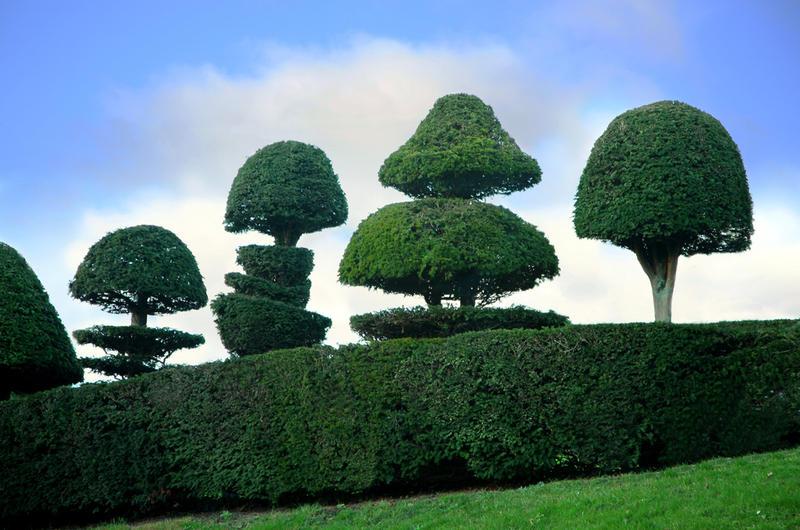 Картинки по запросу Топиарные сады