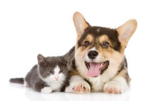 Может ли собака стать «Кошкой года»?