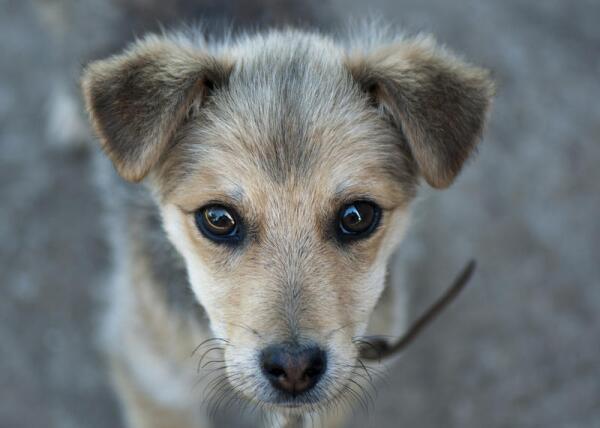 История одной собаки, или Как Чато обрёл дом?