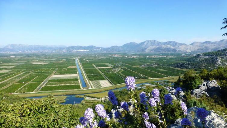 Долина реки Неретва, мандариновые плантации