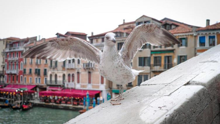 Как увидеть Венецию за один день и получить от этого удовольствие? По главной улице с оркестром...
