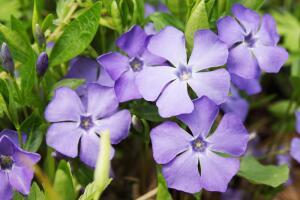 Цветы для могилки усопшего. Что лучше посадить?