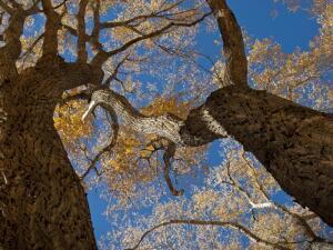 Осенние эмоции. Как пережить меланхоличную пору?