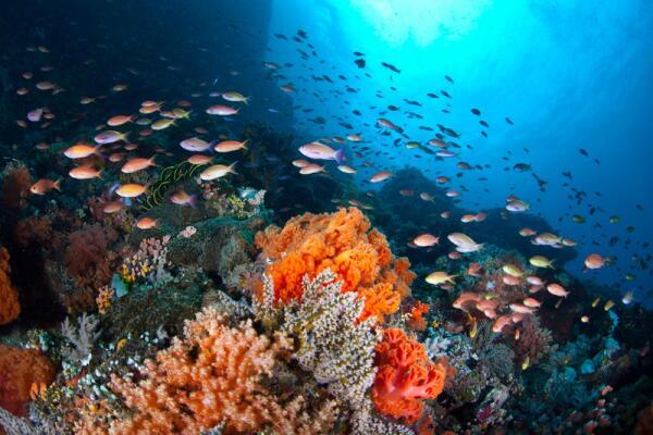 Как образуются и где обитают кораллы?