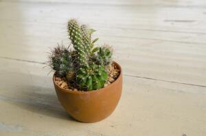 Как домашние растения влияют на нашу жизнь?
