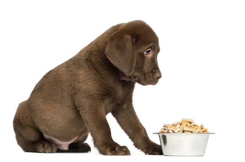 сухой корм или натуральный для собак что лучше