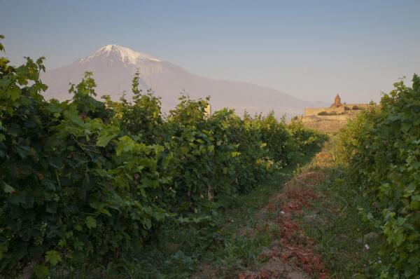 Вина Армении. Сколько лет и как их делают?