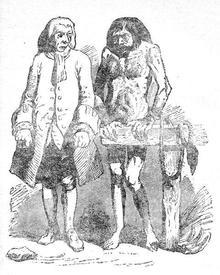 Гулливер и еху