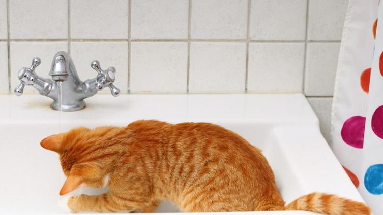 Почему коты не любят купаться?