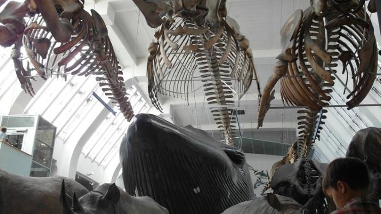 В музее естествознания, Лондон