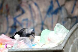 Кто остановит мусорную катастрофу?