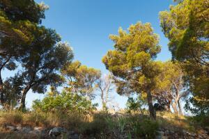 Как деревья-доноры влияют на здоровье человека?