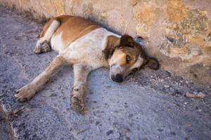 Кто наживается на нашем милосердии к животным?
