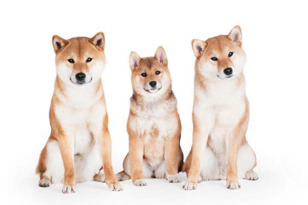 Криптовалюта догкойн (dogecoin). Как «собакоденьги» стали одной из самых популярных криптовалют?