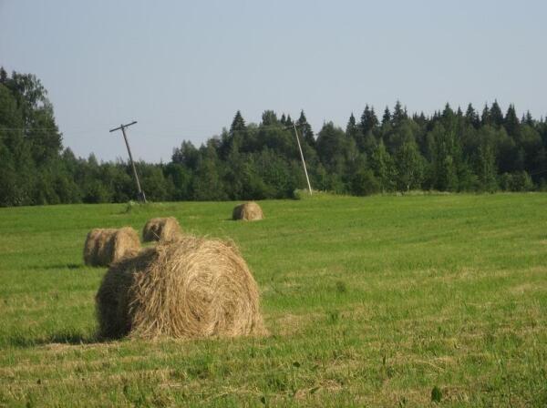 Лахденпохский район в республике считается аграрным