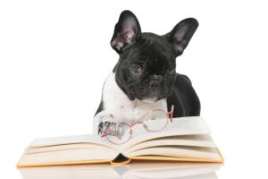 Стоит ли брать с собой собаку в Китай?