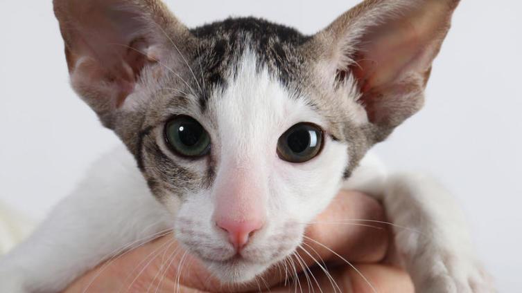 Почешем любимцев за ушком? Ко Всемирному дню кошек