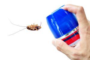 Тараканы, как и любые другие живые существа, не особенно уважают пониженную температуру воздуха.