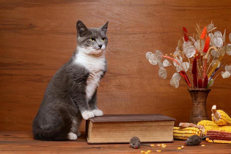 Чем не стоит угощать кошку? 10 опасных продуктов с нашего стола