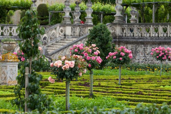 Роза. Как королева цветов покоряла мир?