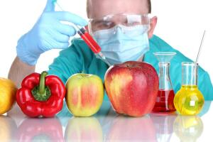 Нужны ли человечеству генно-модифицированные продукты?