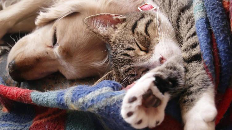 Стоит ли заводить домашнее животное?