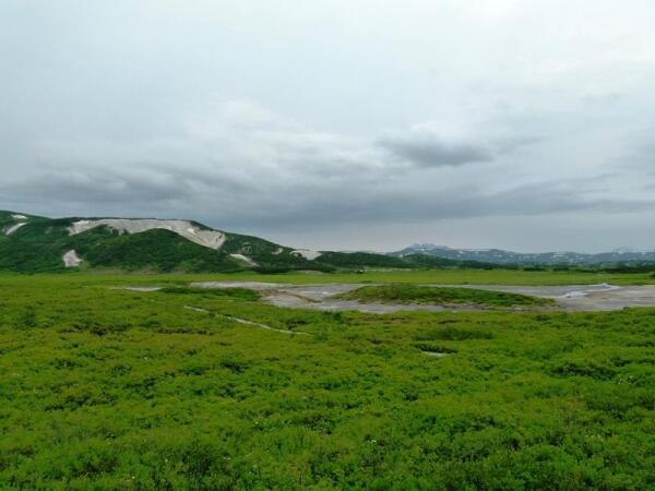 В кальдере Узона вся растительность ярко-зеленого цвета
