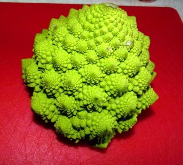 Вот так выглядит кочан капусты романеско