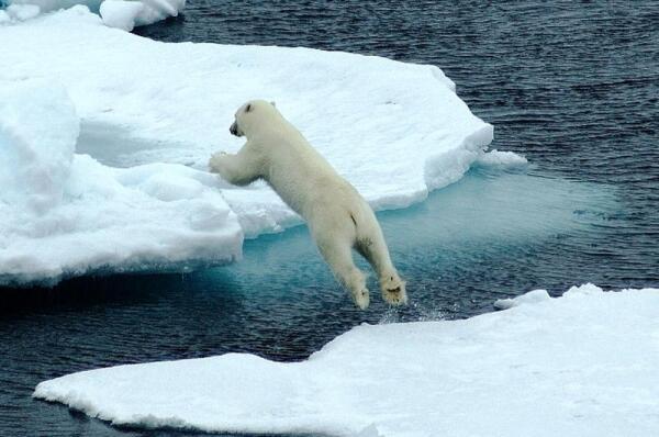 Вот видите, какие подошвы ног у нашего медведя, все видно— и когти, и жесткие волоски