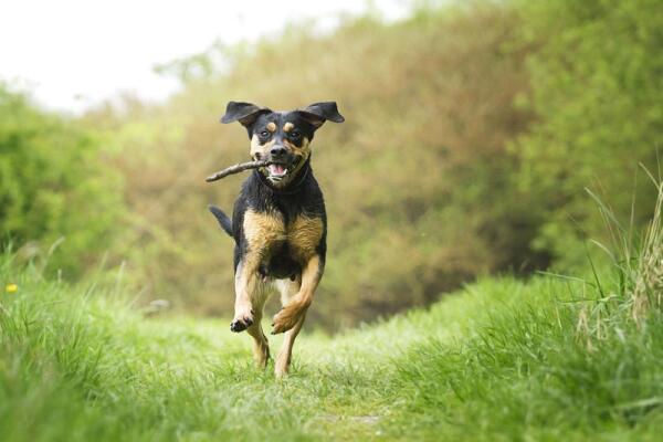 Гуляйте с собакой
