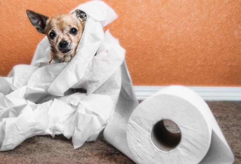 Dog urine in carpet pad