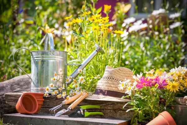 Начали осваивать садовый участок? Большие и маленькие дачные хитрости - борьба с сорняками и вредителями
