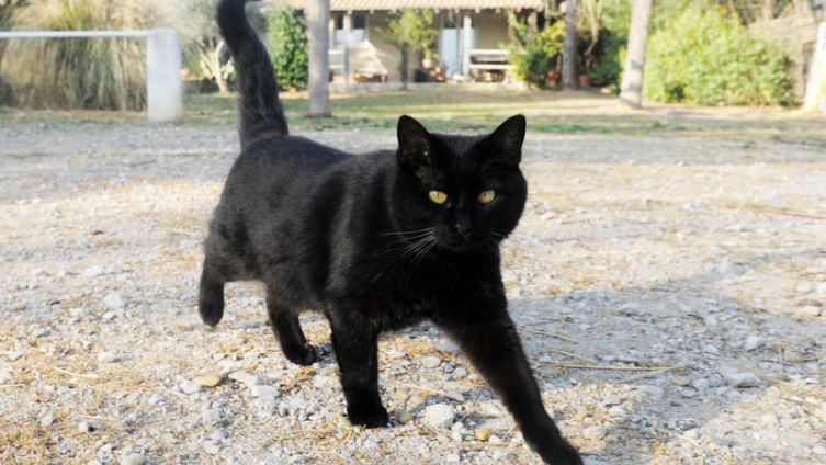 Как переплюнуть Хичкока? Виноградный кот
